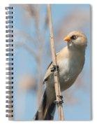 ln11 Bearded Reedling Juvenile Spiral Notebook