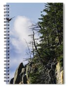 Lofty Bald Eagle Surveys Maines Bold Coast Spiral Notebook