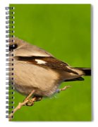 Loggerhead Shrike Spiral Notebook