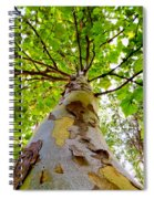 London Plane Tree Spiral Notebook