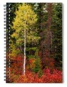 Lone Aspen In Fall Spiral Notebook
