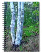Lone Birch In The Maine Woods Spiral Notebook