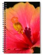 Lone Hibiscus Spiral Notebook