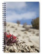 Lone Paintbrush Spiral Notebook