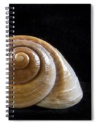 Lone Shell Spiral Notebook