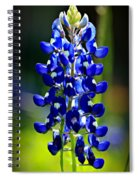 Lone Star Bluebonnet Spiral Notebook