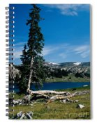 Lone Tree At Pass Spiral Notebook