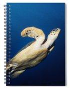 Lone Turtle Spiral Notebook