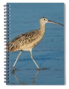 Long-billed Curlew Spiral Notebook