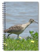Long Billed Curlew At Palacios Bay Tx Spiral Notebook
