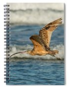 Long-billed Curlew Flying Over The Surf Spiral Notebook