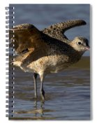 Long-billed Curlew Spiral Notebook