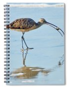 Long-billed Curlew With Crab Spiral Notebook