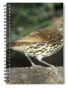 Long-billed Thrasher Spiral Notebook