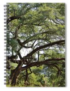 Long Branches Spiral Notebook
