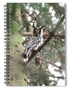 Long Eared Owl At Attention Spiral Notebook
