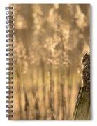 Long-eared Owl Spiral Notebook