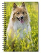 Long Haired Mixed Breed Spiral Notebook