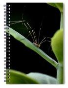 Long Legged Creeper Spiral Notebook