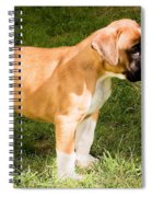 long tailed Boxer Puppy in the sun Spiral Notebook