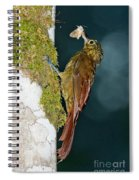 Long-tailed Woodcreeper Spiral Notebook