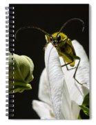 Longhorn Beetle Feeding Spiral Notebook