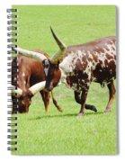 Longhorn Cattle Spiral Notebook