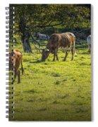 Longhorn Steer Herd In A Pasture Spiral Notebook