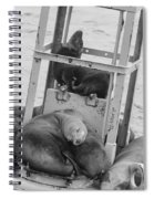 Look At The One In The Middle Black And White Spiral Notebook