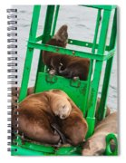 Look At The One In The Middle Spiral Notebook