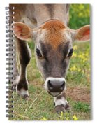 Look Into My Eyes - Jersey Cow - Square Spiral Notebook