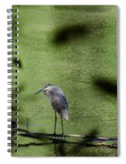 Look Through The Trees Spiral Notebook