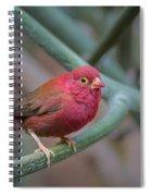 Looking Cute Spiral Notebook