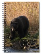 Looking For A Meal Spiral Notebook