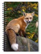 Looking Pretty Foxy Spiral Notebook