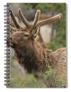 Looking Proud Spiral Notebook