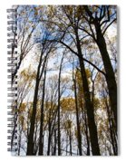 Looking Skyward Into Autumn Trees Spiral Notebook