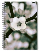 Looking Through The Blossoms 2 By Kaye Menner Spiral Notebook