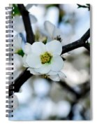 Looking Through The Blossoms Spiral Notebook