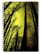 Looking Through The Naked Trees  Spiral Notebook
