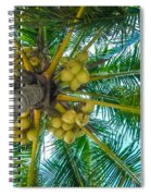 Looking Up A Coconut Tree Spiral Notebook