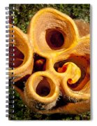 Looking Up The Nostrils Of A Sponge Spiral Notebook