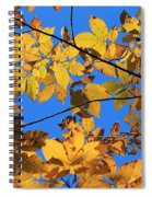 Looking Up To Yellow Leaves Spiral Notebook