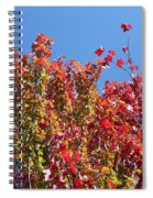 Looking Upward Spiral Notebook