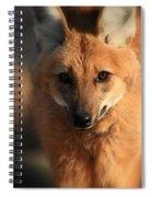 Looks Like A Fox Spiral Notebook