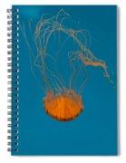 Loop To Loop Orange Nettle Spiral Notebook