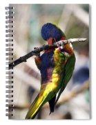 Lorikeet Bird Spiral Notebook
