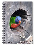 Lorikeet - Peek-a-boo Spiral Notebook
