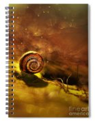 Lost Shell Spiral Notebook