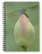 Lotus Bud And Dragonfly Spiral Notebook